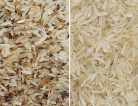 parboiled rice sorting