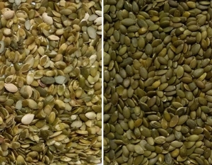 pumpkin seeds sorting