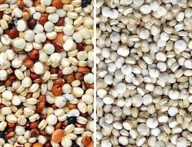 quinoa sorting performance