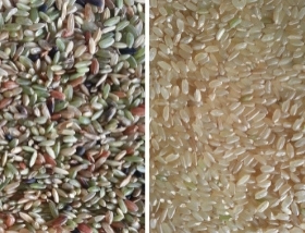 rice color sorter for brown rice