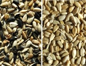 sunflower seeds sorting